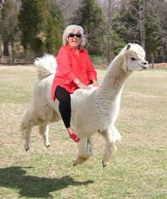 I know this is totally photoshopped but what is funnier than Paula Deen on a llama?