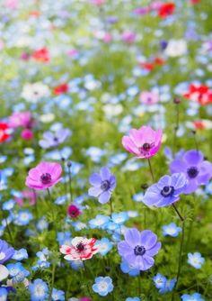 Color inspiration from Fotopus Via Pinterest