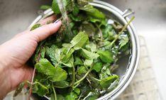 Cómo mantener hojas de menta frescas