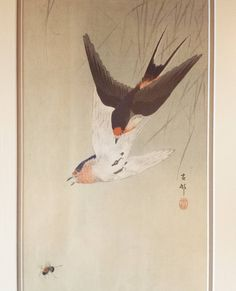 """One from our personal collection: woodblock print by Koson """"Two Swallows Aiming for Bee"""" c.1912 #japanesewoodblock #koson #swallow #bee #woodblock #japan #kacho"""