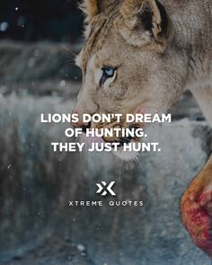 Lions don't dream of hunting. They just hunt.