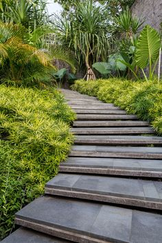 The luscious tropical landscape of this modern house becomes the backdrop for a calming retreat, where a stepped path surrounded by plants leads from the parking area down to the house. Tropical Landscaping, Modern Landscaping, Tropical Garden, Tropical Flowers, Backyard Landscaping, Landscaping Ideas, Landscaping Company, Modern Landscape Design, Traditional Landscape