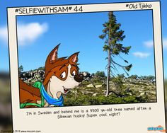 #OldTjikko, the world's Oldest Tree. Old Tjikko is a 9558 year old Norway Spruce, located in Sweden, discovered by Prof. Leif Kullman in 2004. More informative posts at http://mocomi.com/learn/new-world/selfie-with-sam/