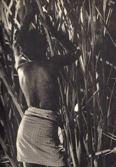 """""""Canes"""" Lionel Wendt. Ceylon."""