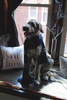 Irish Wolfhound with a Ravenclaw scarf Irish Wolfhound Puppies, Irish Wolfhounds, Cute Puppies, Cute Dogs, Funny Animals, Cute Animals, Scottish Deerhound, Raining Cats And Dogs, Animal Fashion