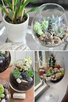 Everyone needs an adorable wine glass terrarium in their lives: http://hsbu.us/8Z0g4qF