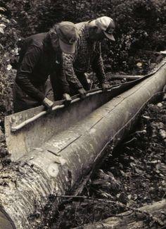 Peeling a sheet of bark for the construction of a new birchbark canoe .The ultimate durability of a birchbark canoe is greatly dependent on the quality of the birchbark ; from '' Building an Algonquin Birchbark Canoe '' ; photo Henri Vaillancourt ; Maniwaki Quebec 1980