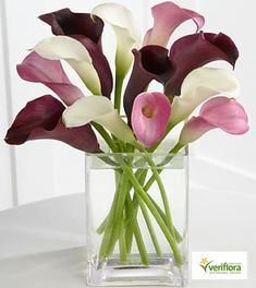 purple and ivory calla lilies. i love calla lilies! Calla Lily Bouquet, Calla Lillies, Deco Floral, Arte Floral, Exotic Flowers, Beautiful Flowers, Elegant Flowers, Tropical Flowers, Beautiful Cakes