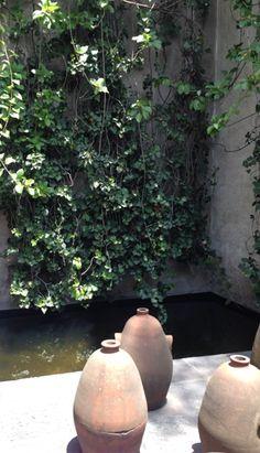 Luis Barragán Gardens, Mexico City.  https://www.facebook.com/bodosperleinlondon