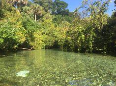 Kelly park rock springs florida