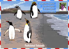 Ahead of World Penguin Day, The Latin America Travel Company have created a guide on where to see penguins in their natural habitats. Penguin Day, King Penguin, Macaroni Penguin, Gentoo Penguin, Sustainable Tourism, Travel Companies, Latin America, Habitats, Penguins