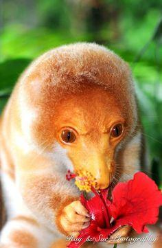 Kotie of New Guinea