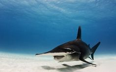 Sharks Worth More in the Ocean Than On a Menu
