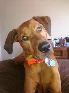 Dog Training Nazareth Pa