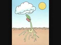 Partes de una planta - YouTube Spanish 1, Life Cycles, Seeds, Classroom, Science, Teaching, History, School, Nature