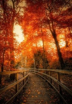 The path to home on a enchanted Fall's Early Eve!