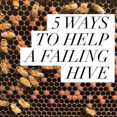 you are inspecting your hives regularly, you can usually see the end coming. When a colony starts to fail, it can be challenging to figure out why, let alone solve the issue. So, what can a beek…