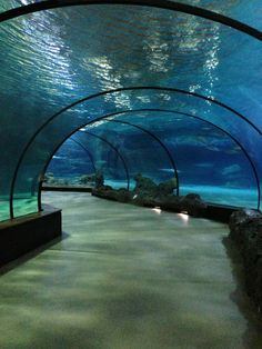 Oceanium, Blijdorp Zoo! This looks so amazing