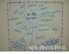 What's in the ocean? anchor chart.