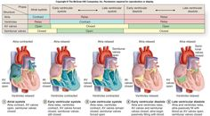 Cardiac cycle w valves This is awesome.