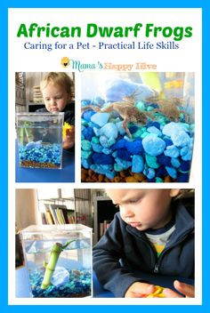Learn about African Dwarf Frogs as pets for young children. - www.mamashappyhive.com