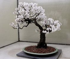 Bonsai styles are different ways of training your bonsai to grow the way you want it to. Get acquainted with these styles which are the basis of bonsai art.