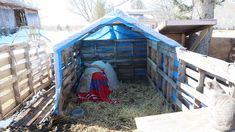 Pet Pigs, Baby Pigs, Pig Shelter, Grants Farm, Pig Showing, Funny Pigs, Funny Farm, Pig Crafts, Pot Belly Pigs