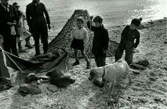 Golfo di Orosei, anni '50 . Sulla spiaggia incontro tra una foca monaca e un cane, sotto lo sguardo divertito dei presenti.