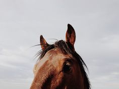 Portrait of horse. Near Cold Creek, NV.