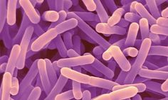 Probiotic bacteria may aid against anxiety and memory problems People who took capsules containing Bifidobacterium longum 1714 reported less stress and fared better on memory tests, study finds Dealing With Depression, Gut Bacteria, Brain Health, Gut Health, Mental Health, Memory Problems, Health