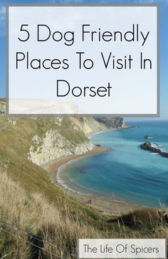 5 Dog Friendly Places To Visit In Dorset - The Life Of Spicers Travel Tips For Europe, Places To Travel, Places To Visit, Dog Travel, Family Travel, Travel Uk, Travel England, Dog Friendly Holidays, Family Days Out