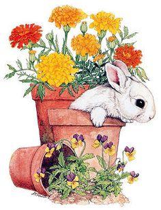 .Bunny.                   t