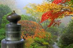 View from the Wooden Bridge in Portland Japanese Garden