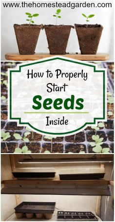 to Start Seeds Inside - How to Start Seeds Inside (top tips from an expert gardener!) Be prepared for your best gardening season ever with this ultimate seed starting guide.How to Start Seeds Inside (top tips from an expert gardener!) Be prepared for your Diy Gardening, Organic Gardening Tips, Gardening For Beginners, Container Gardening, Gardening Supplies, Gardening Quotes, Hydroponic Gardening, Flower Gardening, Gardening Websites