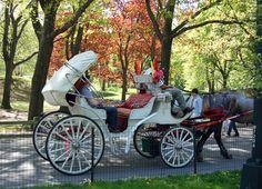 Distintos tipos de carruajes tirados por caballos   eHow en Español