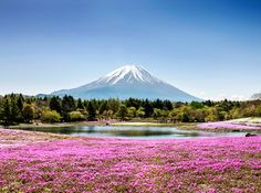 MOUNT FUJI, JAPAN This active volcano just southwest of Tokyo has a reverent status in Japanese culture, believed to be the country's holiest mountain. During springtime, cherry blossom trees light up the five lakes surrounding Mount Fuji.