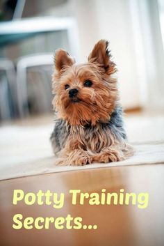 Want to learn a few Yorkie puppy potty training secrets? Learn these and many other dog training secrets using these hands-off methods. Click here to read more>> http://www.dog-names-and-more.com/hands-off-dog-training.html