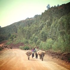 Hard working parents heading to market in Kacha Bira. Every community has a market day, and many people sell their goods at more than one market a week. www.rootsethiopia.org