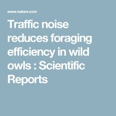 Traffic noise reduces foraging efficiency in wild owls : Scientific Reports