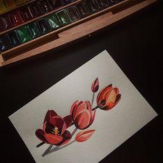 ✨✨#sashaunisex #watercolor #tulips