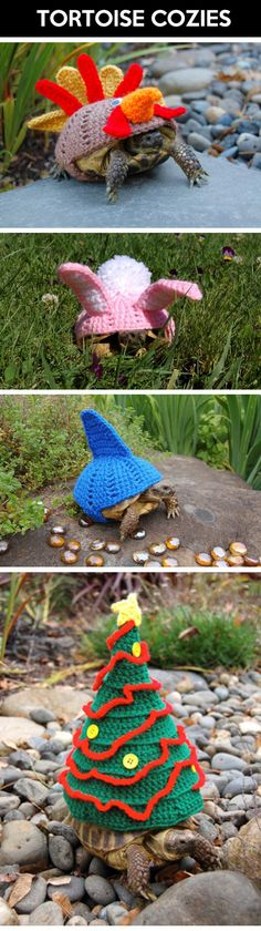 This makes me want a turtle and to learn how to knit