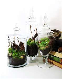 Apothecary jars used for terrariums!