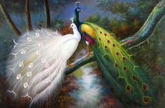 Image from http://hdwallpapers.cat/wallpaper/birds_of_a_faether_oil_white_peacocks_hd-wallpaper-643857.jpg.