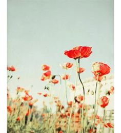 Bright red poppies creating a colorful bold print- This photo is printed by a professional lab using high quality inks, and archival paper with a lustre finish that will last a lifetime