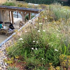 Bio Diverse Green Roof for Fordhall Organic Farm - Sedum Supply Ltd Roof Plants, Roof Architecture, Sustainable Architecture, Contemporary Architecture, Residential Architecture, Green Roof Benefits, Sedum Roof, Living Roofs, Living Walls