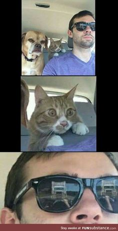 Funny Cat Memes 813814595147467432 - Just hang tight guys I know what I'm doing Source by matthieugrondin Crazy Funny Memes, Really Funny Memes, Stupid Memes, Funny Relatable Memes, Haha Funny, Funny Cute, Funny Jokes, Top Funny, Hilarious