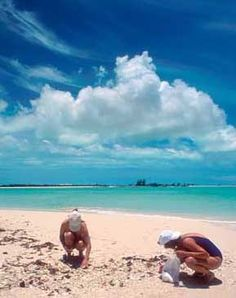 I will be there.......Turks and Caicos Beach , conch hunting and snorkelling