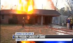 Woman Lights Snake On Fire, Flaming Snake Burns Woman's House Down  Read more: http://www.uproxx.com/tv/2013/03/woman-lights-snake-on-fire-flaming-snake-burns-womans-house-down/#ixzz2PWffancy