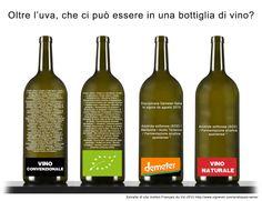 gli ingredienti del vino