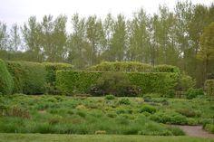 Early Spring in Piet Oudolf's garden.